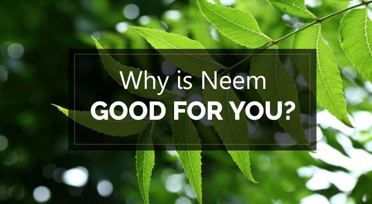 Neem Oil benefits
